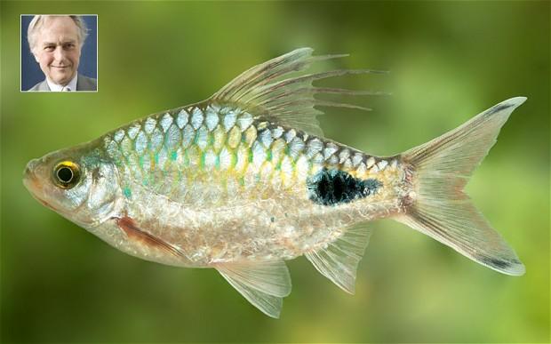 Dawkinsia (genus)