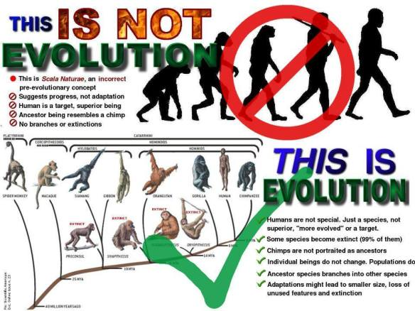 This is not Evolution; this is Evolution